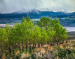 Aspen Grove,Gore Range,Colorado