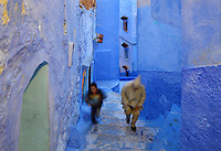 Man and boy climbing the steps of a narrow street painted blue in the medina or old town of Chefchaouen in the Rif mountains of North West Morocco. Chefchaouen was founded in 1471 by Moulay Ali Ben Moussa Ben Rashid El Alami to house the muslims expelled from Andalusia. It is famous for its blue painted houses, originated by the Jewish community, and is listed by UNESCO under the Intangible Cultural Heritage of Humanity. Picture by Manuel Cohen
