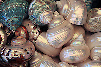 Colorful shells in a shop on Capri Island, Italy