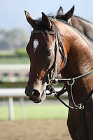 Know More for trainer Doug O'Neill at Santa Anita Park in Arcadia California