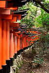 A long row of orange Torii gates at Fushimi Inari Taisha head shrine in Kyoto, Japan 2017