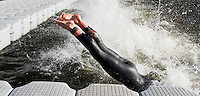 28 JUN 2012 - LONDON, GBR - Liz Blatchford dives into the water at the start of the swim of the elite women's 2012 Canary Wharf Triathlon heat in Canary Wharf, London, Great Britain .(PHOTO (C) 2012 NIGEL FARROW)