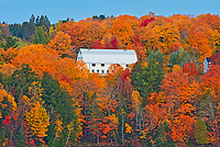 Barn and the Acadian forest in autumn foliage. Rolling hills. <br />