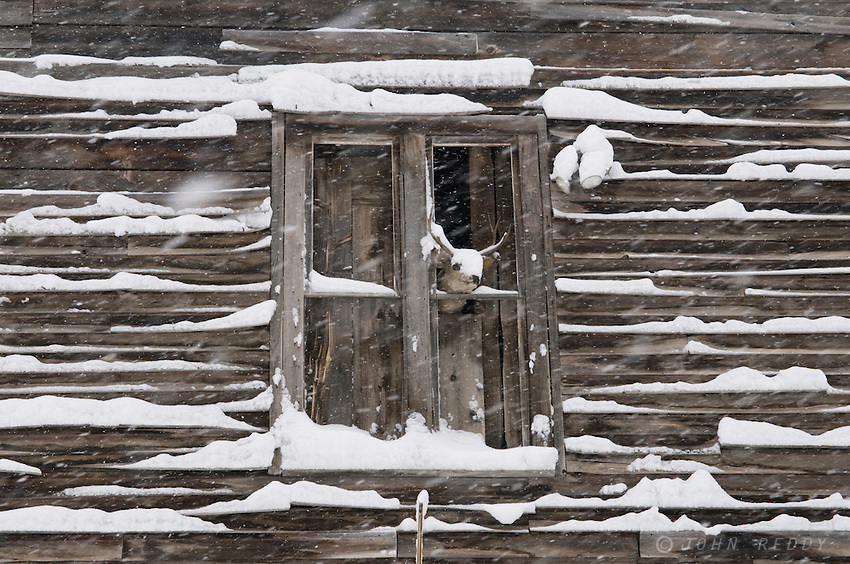 stuffed deer head in open window of historic wooden building during blizzard in Rimini