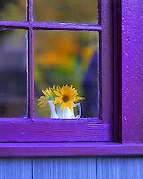 Looking through window at sunflowers in vase in the Willamette Valley, Oregon.