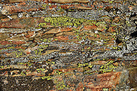Lichen and rock layers on side of large boulder in alpine setting, Glacier National Park.  Fall.