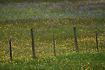 A red-winged blackbird perches on a fence post in a meadow of flowers.