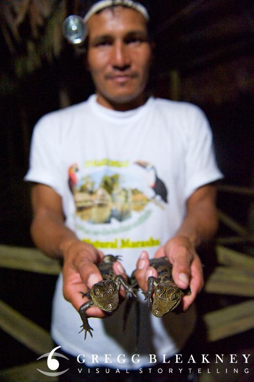 Caiman Hatchlings - Amazonas - Peru
