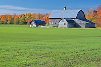 A Door County barn stands against the autumn forest, Door County, Wisconsin