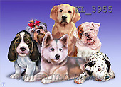 Interlitho, Lorenzo, REALISTIC ANIMALS, paintings, various dogs(KL3955,#A#) realistische Tiere, realista, illustrations, pinturas ,puzzles