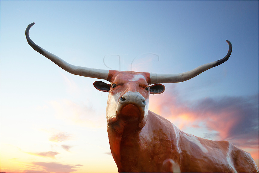This lifelike longhors is found in Co-Op Parking Lot behind the store on the University of Texas campus in Austin, Texas. I took this image one morning after photographing the UT Tower as it glowed orange after a Longhorn football victory.