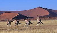 Africa-NAMIBIA-photos. Sossusvlei, Spitzkoppe, Kokerboom, Etosha, wildlife, park, animals, scenic.