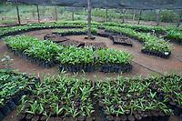 Equipe do programa Germoplasma da ELN, no laboratório e produção de mudas.<br /> O Programa de Germoplasma Florestal de Tucuruí vai coletar, tratar e conservar material genético florestal para uso imediato ou futuro.  Germoplasma é qualquer parte da planta (folha, célula, galho, semente) que permite a reprodução.  As sementes podem ser usadas para recuperação de áreas degradadas, projetos de pequenos produtores e até para reflorestamento em larga escala.<br /> <br /> Tucuruí, Pará, Brasil.<br /> Foto Paulo Santos.<br /> 28/08/2013