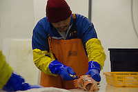 Processing Fish at Prime Select Seafoods, Cordova, Alaska, US, October 2012