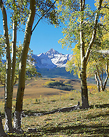 Wilson Peak framed thru aspen trees on a fall morning.