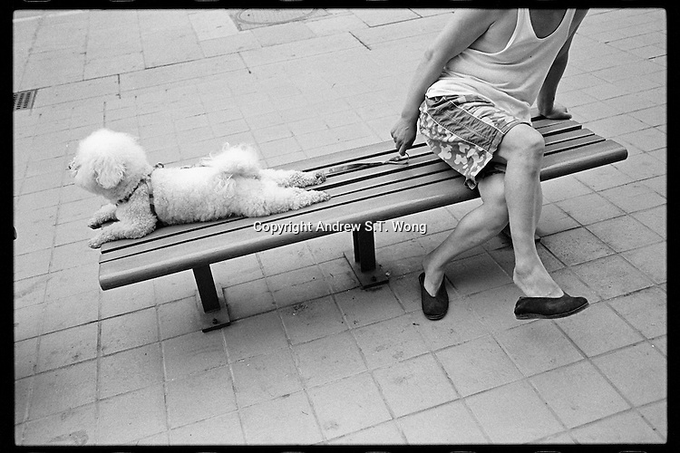 A Chinese man and his poodle enjoy a quiet evening in Beijing, China on July 15, 2010. (Leica M6, 35mm f2, Kodak Tri-X film)