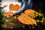11.11.18 - Hanging On....