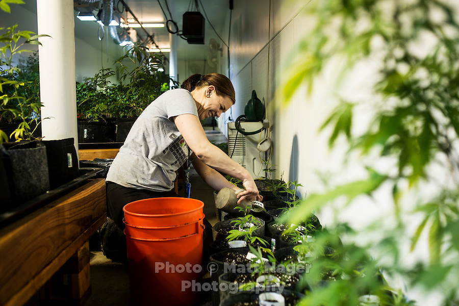 Shelby Doggett (cq) at the Denver Relief grow house in Denver, Colorado, Tuesday, March 5, 2013. With Colorado's Amendment 64, the state has been working to decide how it will transition to legalized marijuana in the state...Photo by Matt Nager