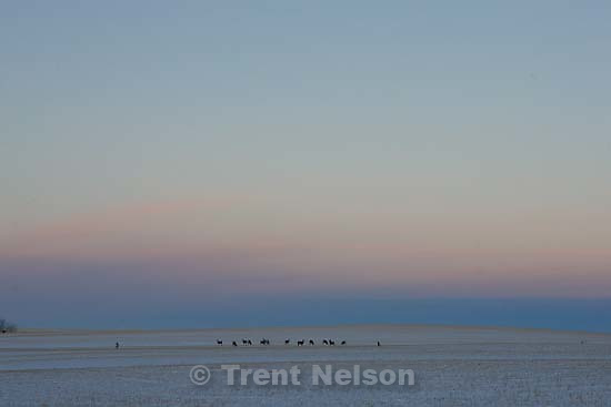 deer on the plains at sunset