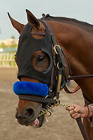 HALLANDALE BEACH, FL  JANUARY 27: West Coast heads to the saddling paddock before the running of theColl Pegasus World Cup Invitational, at Gulfstream Park Race Track on January 27, 2018, in Hallandale Beach, Florida. (Photo by Casey Phillips/ Eclipse Sportswire/ Getty Images)