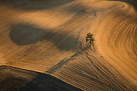autumn aerial. wheat fields, Palouse area, near Pullman, WA