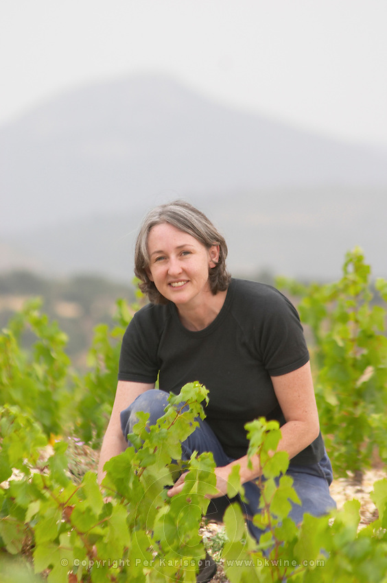 Karen Turner Prieure de St Jean de Bebian. Pezenas region. Languedoc. Vine leaves. France. Europe. Vineyard.