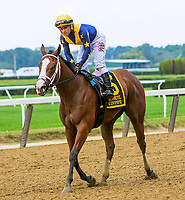 OCTOBER 7, 2018 : Covfefe in the Frizette Stakes at Belmont Park on October 6, 2018 in Elmont, NY.  Sue Kawczynski/ESW/CSM
