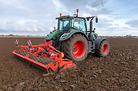 Power harrowing in beans that have been broadcast on to stubble<br /> &copy;Tim Scrivener Photographer 07850 303986<br />      ....Covering Agriculture In The UK....