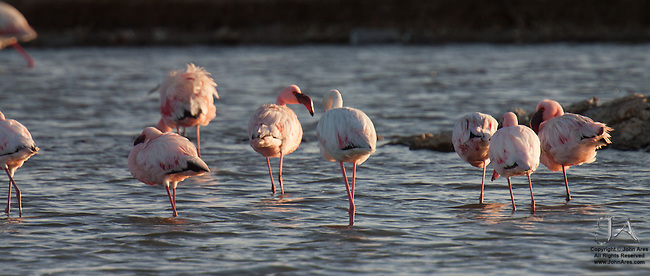 Flamingoes in Walvis Bay, Namibia, Africa
