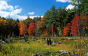 Autumn foliage in a wetlands area in state of New Hampshire USA.