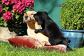 Bob, ANIMALS, REALISTISCHE TIERE, ANIMALES REALISTICOS, dogs, photos+++++,GBLA3915,#a#, EVERYDAY