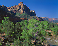 Zion National Park, UT<br /> Spring cottonwoods and evergreens in the valley of the North Fork Virgin River under the Watchman