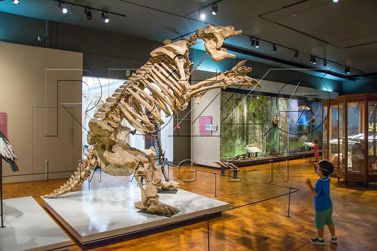 Museu de Zoologia da Universidade de São Paulo, São Paulo - SP, 12/2016.