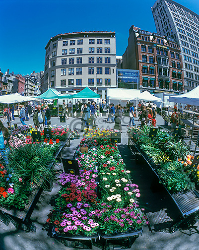GREENMARKET UNION SQUARE MANHATTAN NEW YORK CITY USA