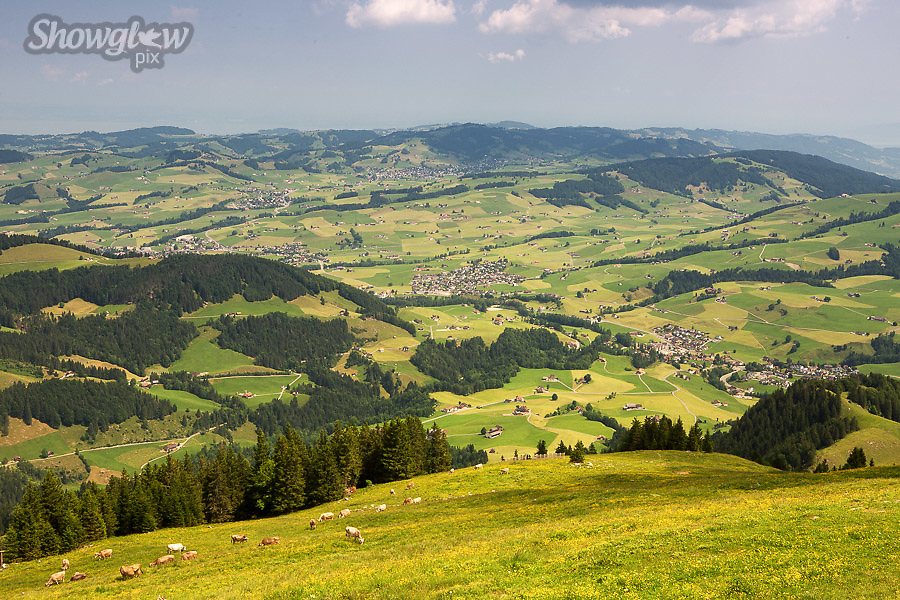 Image Ref: SWISS066<br /> Location: Ebenalp, Switzerland<br /> Date of Shot: 21st June 2017
