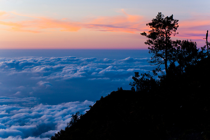 Landscape Photo Above the Clouds of a Tree Silhouetted at Sunset from Mount Rinjani, Lombok, Indonesia. This photo of a tree silhouetted above the clouds against a bright purple sunset was taken from the campsite on day two of the three day Mount Rinjani Trek.