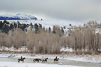 Hunters and Pack String crossing Gros Ventre River in Grand Teton National Park