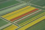 Flower fields in The Netherlands