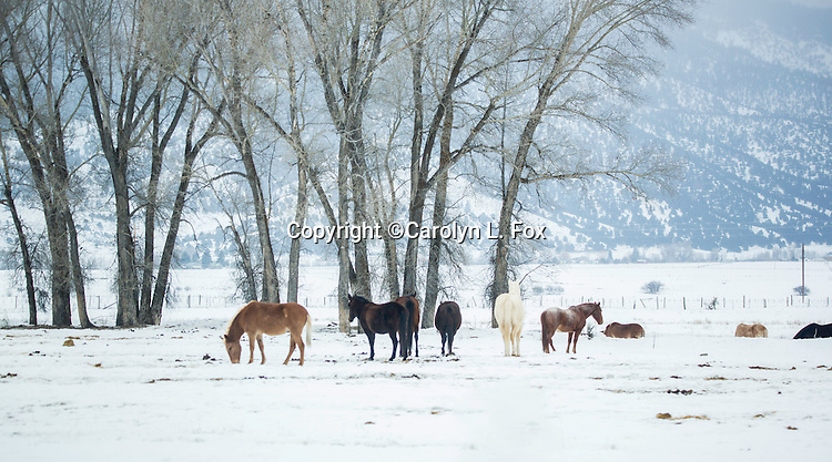 A group of horses stand in a field in the snow.