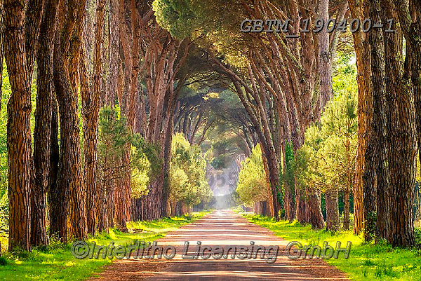 Tom Mackie, LANDSCAPES, LANDSCHAFTEN, PAISAJES, photos,+Europa, Europe, European, Italia, Italian, Italy, Tom Mackie, Toscana, Tuscan, Tuscany, avenue, green, horizontal, horizontal+s, nobody, path, pathway, pathways, pine tree, pine trees, tourist attraction,Europa, Europe, European, Italia, Italian, Ital+y, Tom Mackie, Toscana, Tuscan, Tuscany, avenue, green, horizontal, horizontals, nobody, path, pathway, pathways, pine tree,+pine trees, tourist attraction+,GBTM190400-1,#l#, EVERYDAY