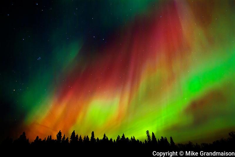 Northern lights (Aurora borealis)<br /> Birds Hill Provincial Park<br /> Manitoba<br /> Canada