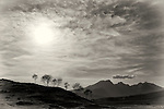 Tree Silhouettes, Elgol, Isle of Skye, Scotland