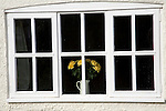 Yellow roses in vase in window