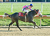 Twisted Silver winning at Delaware Park on 11/1/10