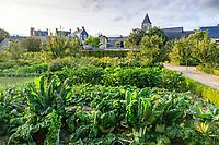 France, Sarthe (72), Le Lude, château et jardins du Lude, le potager, bettes, haricots nains,  aubergines, zinnias...et serre adossée au fond