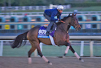 Bobby's Kitten, trained by Chad Brown, trains for the Breeders' Cup Juvenile Turf at Santa Anita Park in Arcadia, California on October 30, 2013.