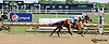 Nolans Dream winning at Delaware Park on 8/16/14