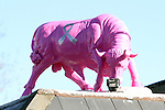 Pink Bling Black Bull Part Two On the Roof
