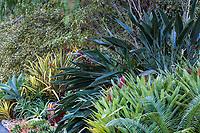 Strelitzia reginae (Bird of Paradise) in Patrick Anderson Garden