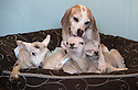 2015_04_21_sheep_dogs_lambs